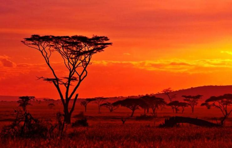 africa_african_sunset_in_the_serengeti_-_12_0