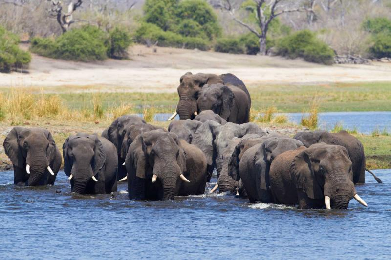 africa_botswana_a_herd_of_african_elephants_