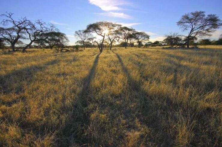 africa_botswana_acacia_trees_at_sunset_in_africa_23