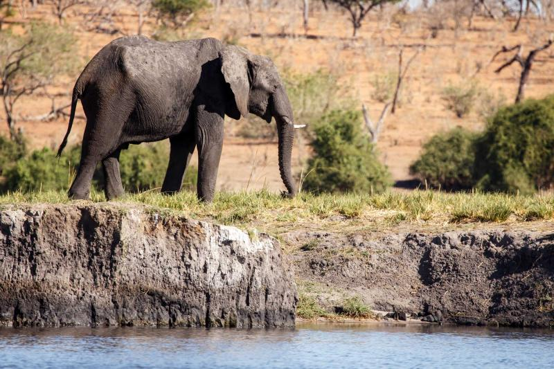 africa_botswana_chobe_national_park_elephant_alone