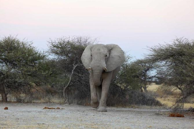 africa_botswana_elephant_at_nxai_pan