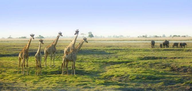 africa_botswana_giraffes_in_botswana_savannah_with_elephants1