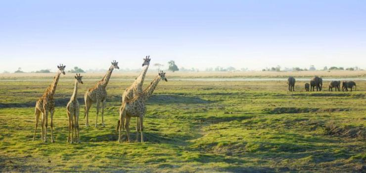 africa_botswana_giraffes_in_botswana_savannah_with_elephants1