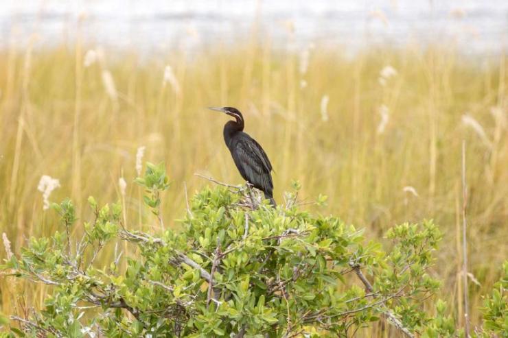 africa_botswana_moremi_national_park_okavango_delta_bird