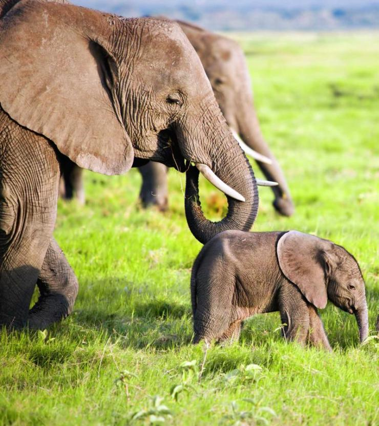 africa_kenya_tanzania_amboseli_elephants_family_on_african_savanna_0