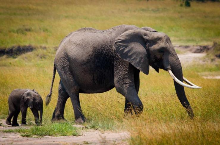 africa_safari_elephants