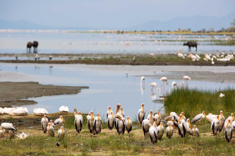 africa_tanzania_animal_around_the_lake_manyara_national_park_in_tanzania_africa