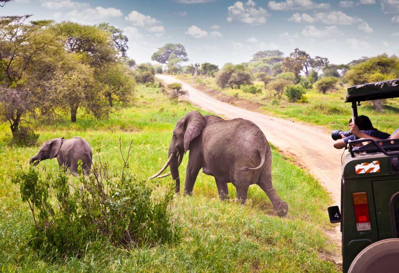 africa_tanzania_elephants_family_on_pasture_in_african_savanna_2