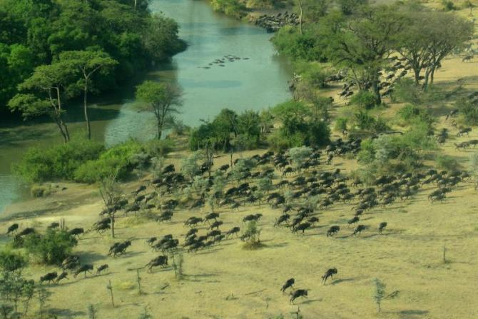 africa_tanzania_great_migration_-_wildebeests_running_by_mara_river_b_tan_1