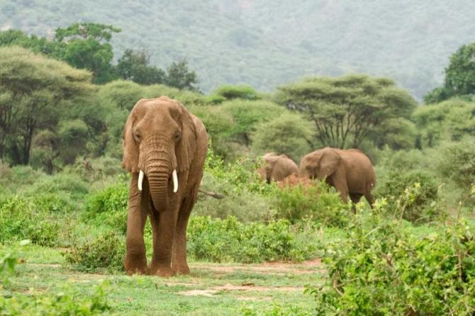 africa_tanzania_lake_manyara_national_park_elephants