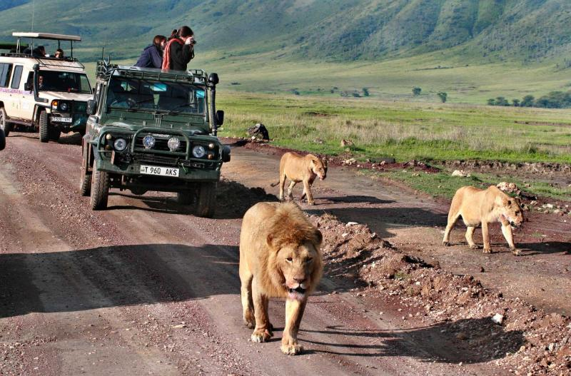 africa_tanzania_ngorongoro_jeep_safari_in_africa_wildlife_move_away