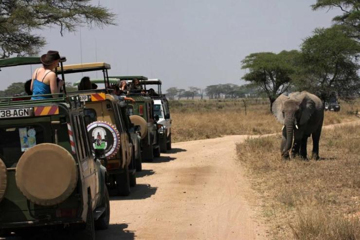 africa_tanzania_serengeti_elephant_crossing_the_road_during_their_safari_e