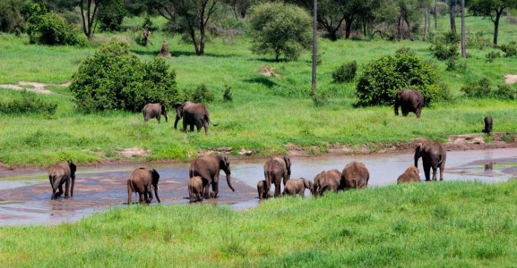 africa_tanzania_serengeti_herd_of_elephants_crossing_river_3
