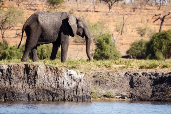 africabotswanachobenationalparkelephantalone12