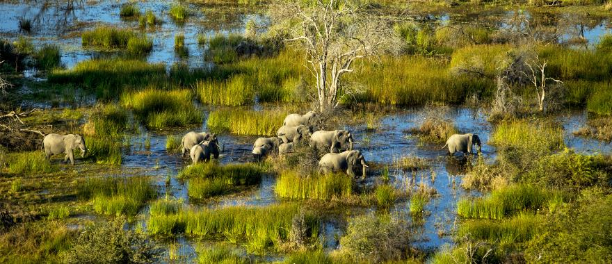 an_elephant_family_is_walking_in_the_water_okavango_delta_botswana.aerial_photography._itas_day_time_h1