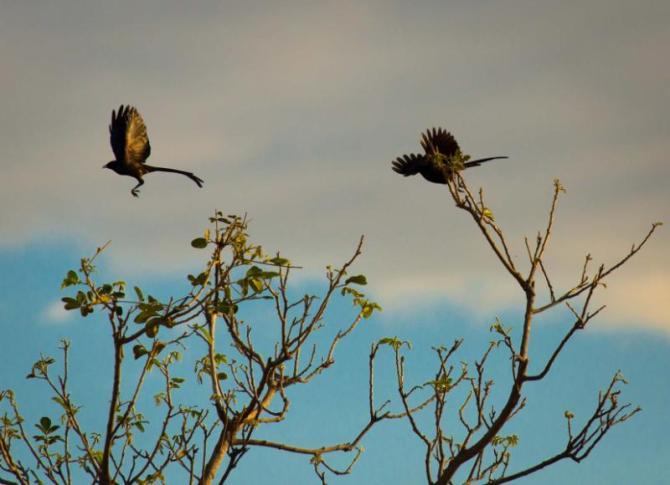 black_bird_flying_off_a_tree