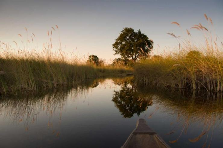 botswana_okavango_delta_tour_papyrus_landscape