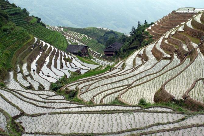 china-guangxi-longji-rice-terracesshutterstock