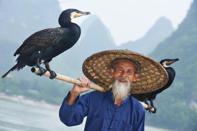 china-guangxi-yangshou-traditional-fisherman-with-cormorants
