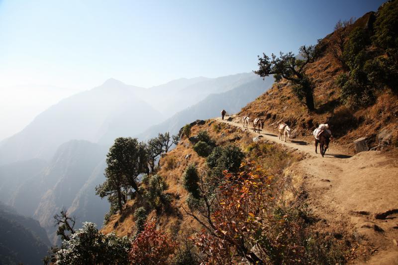 china_tibet_donkeys_on_himalayas_donkeys_on_the_way_to_everest_base_camp