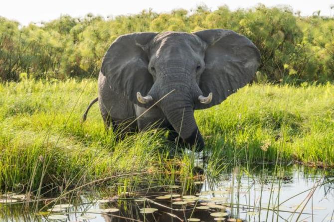 elephants_okavango_delta_botswana