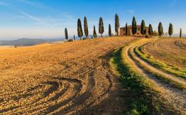 fields_and_vineyards_in_italy_0
