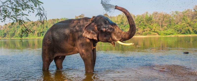 india-kerala-elephant-bathing