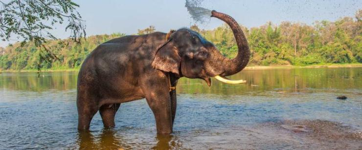 india-kerala-elephant-bathing