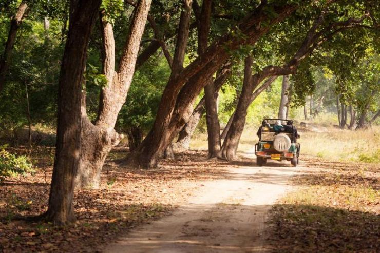 india_a_safari_jeep_on_a_trail_through_forest_in_bandhavgarh_national_park_in_madhya_pradesh-e