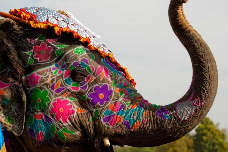 india_jaipur_a_painted_elephant_at_the_elephant_festival_in_jaipur