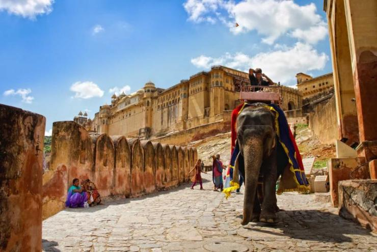 india_jaipur_decorated_elephant_carry_driver_in_amber_fort-e