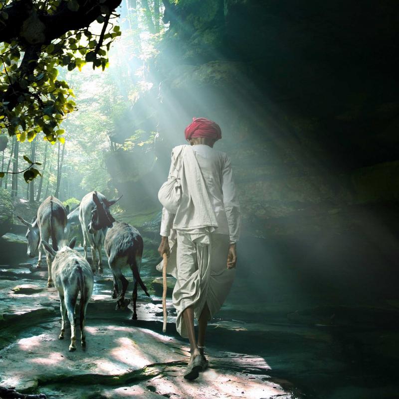 india_man_walking_with_donkeys_cropped