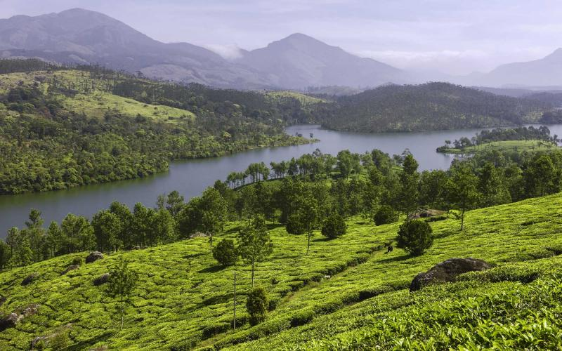 india_munnar_tea_plantation