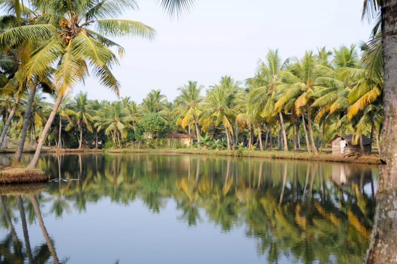 india_river_of_the_backwaters_at_kollam_on_india