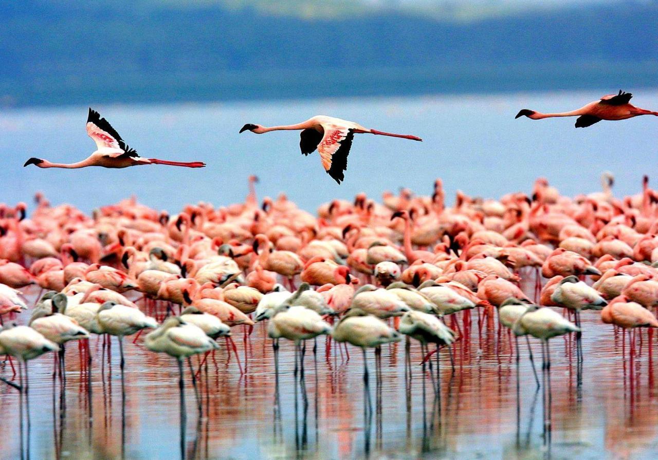 lake-manyara-birds_0
