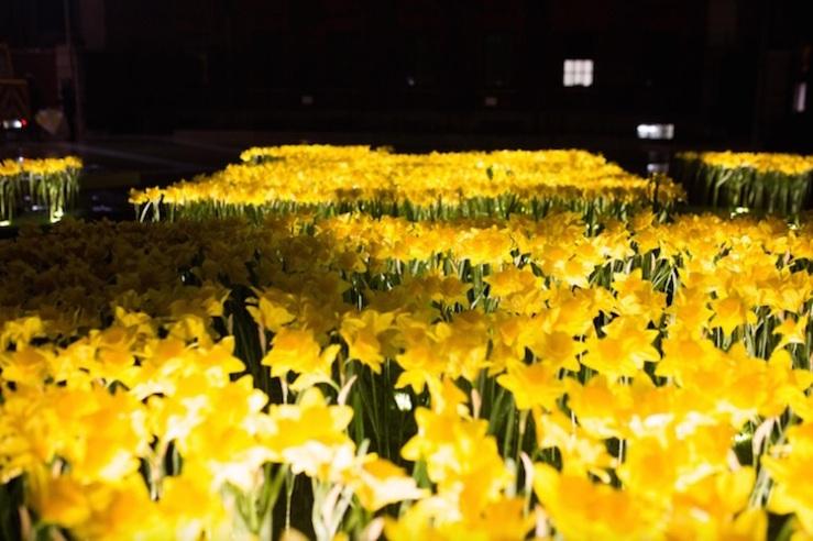 marie-curie-greyworld-garden-of-light-daffodil-installation-2