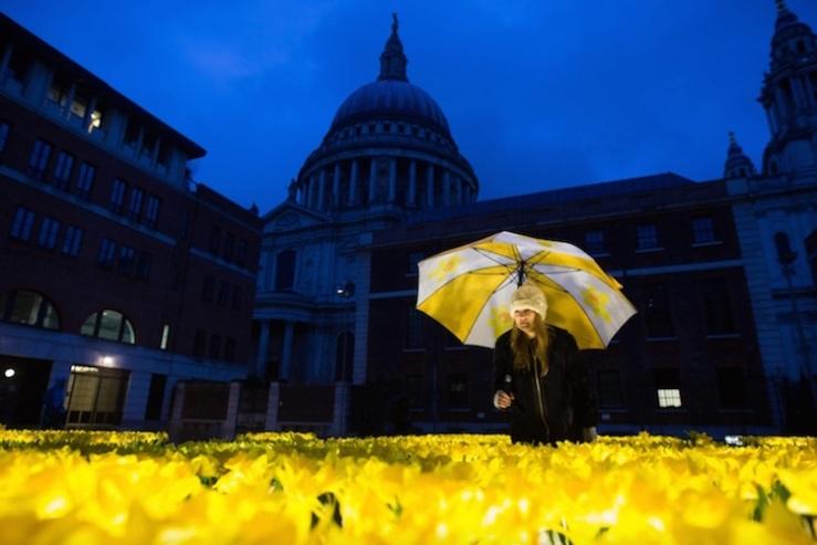 marie-curie-greyworld-garden-of-light-daffodil-installation-3