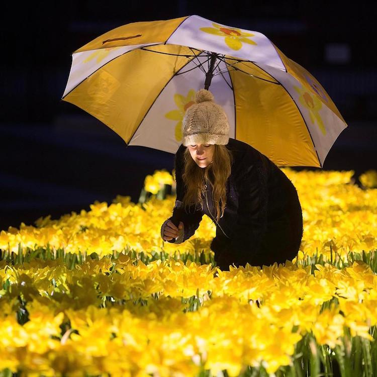 marie-curie-greyworld-garden-of-light-daffodil-installation-4