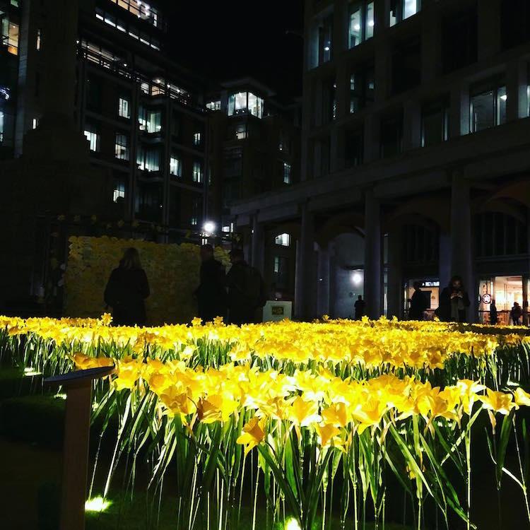 marie-curie-greyworld-garden-of-light-daffodil-installation-5