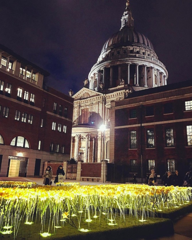 marie-curie-greyworld-garden-of-light-daffodil-installation-7