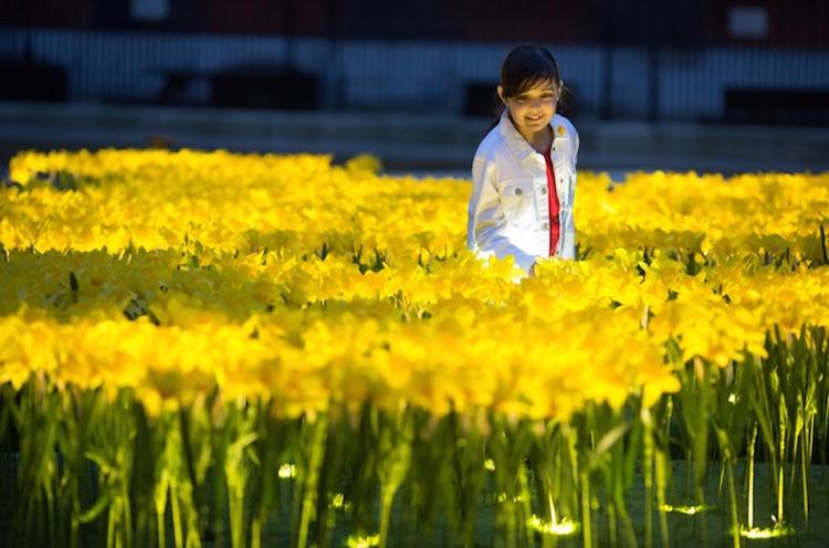 marie-curie-greyworld-garden-of-light-daffodil-installation-9