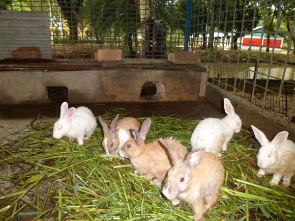 Rabbit Farming1
