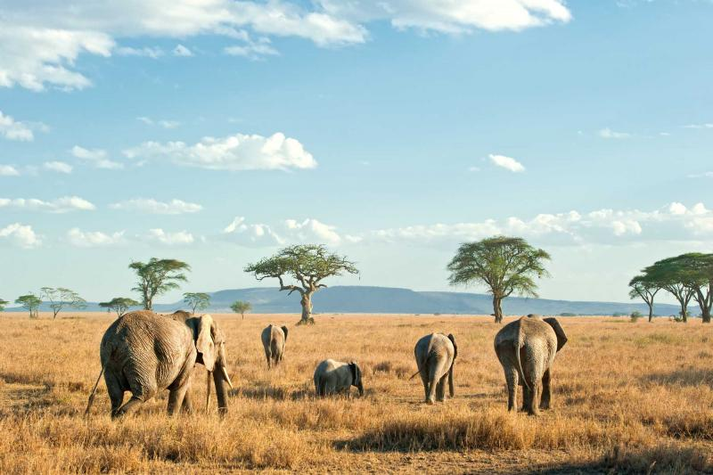 tanzania-serengetia-herd-of-elephants-on-the-plains_0