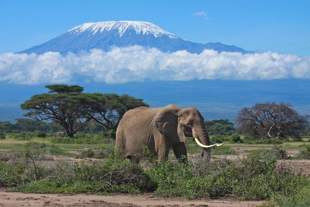 Tanzania_Kilimanjaro_Tour_Elephant_and_Mt._Kilimanjaro_-_Globeinter_Somak_Planet_Tours_Bobby_Tours