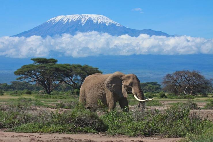 Tanzania_Kilimanjaro_Tour_Elephant_and_Mt._Kilimanjaro_-_Globeinter_Somak_Planet_Tours_Bobby_Tours