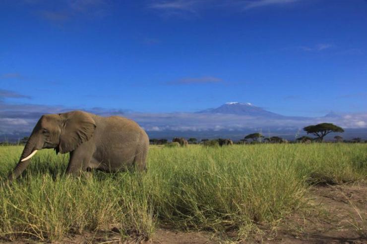 africa-tanzania-kilimanjaro-elephant-grazing-full_1