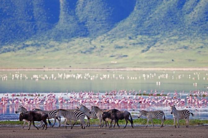 africa-tanzania-ngorongoro-crater-zebras-and-flamingos_2_0
