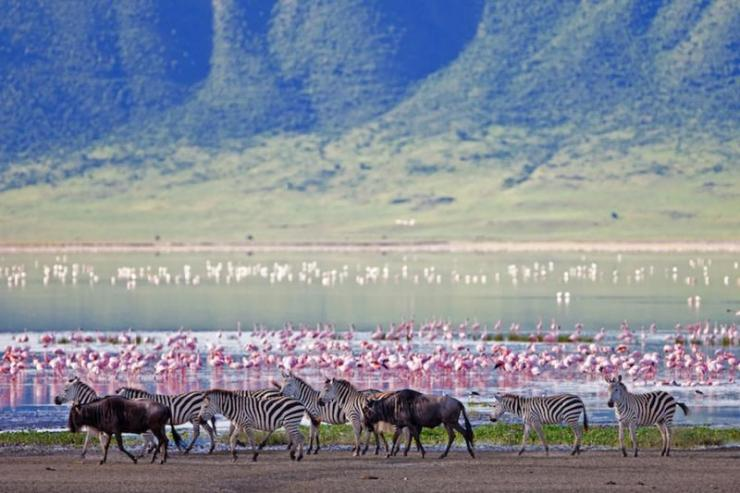 africa-tanzania-ngorongoro-crater-zebras-and-flamingos_2_0