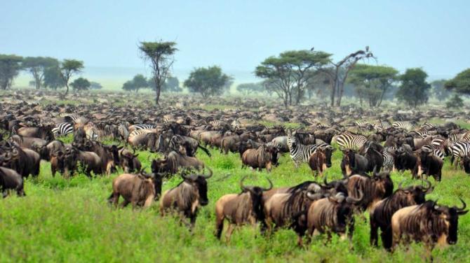 africa-tanzania-serengeti-national-park-great-migration_0