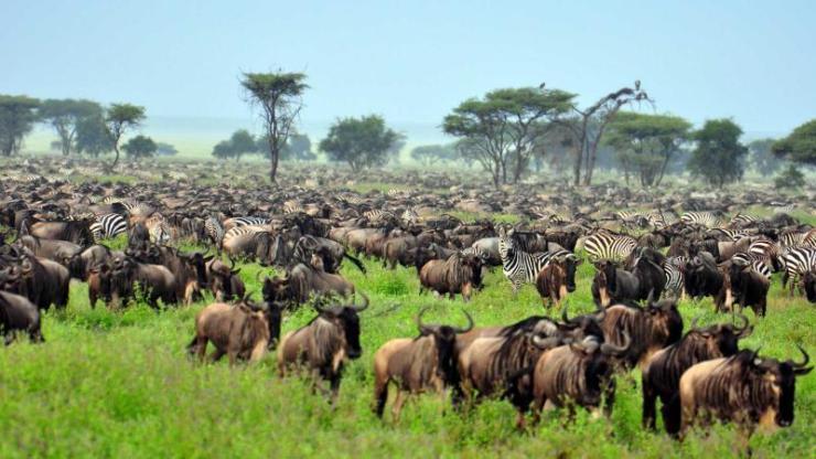 africa-tanzania-serengeti-national-park-great-migration_4